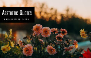 500+ Inspirational Aesthetic Quotes, Saying 2020